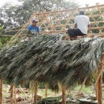 Local men building a thatched roof in Tinum.